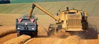 урожай зерновых в казахстане сократился вдвое